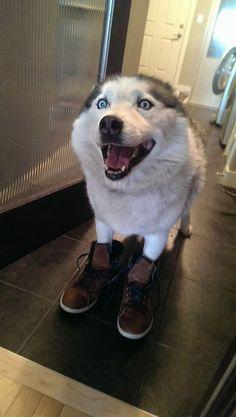 La felicidad hecha perro