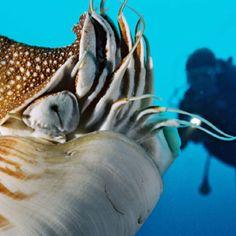 http://www.delphin-tours.de/site.php?id=254  Palau