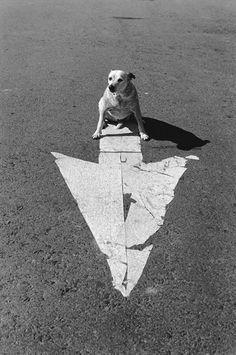 Elliott Erwitt on Pinterest | Elliott Erwitt, Irish Wolfhounds and Lo…