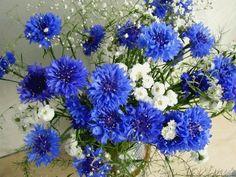 Gifs , Mensagens e Imagens :: Gifs de Flores