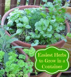 Easy #Herbs To Grow In a Container #Garden via Adventures in Coupons