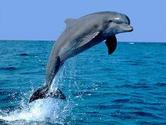 Fondos de pantalla de Animales Marinos   Delfin 06