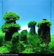 Bildergebnis für aquarium design