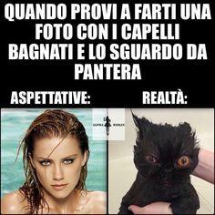Today's Deals: New Deals. - Today's Deals: New Deals. Haha Meme, Italian Memes, Magic Words, Funny Cute, Make Me Smile, Real Life, Cool Pictures, Funny Jokes, Tortoise Turtle