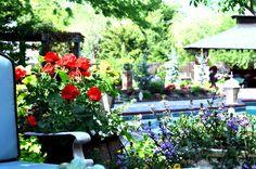 flowers around the pool . Love them :)