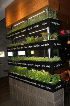 This amazing display of herbs also make a great room divider!
