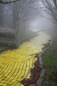 #Adlandpro There is really a yellow brick road in beach Mountain, North Carolina, I wonder if you walk down it ,will you find the Great and powerful OZ?