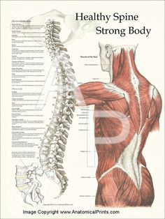 healthy spine - strong body