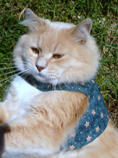 Cat Harness_ Star by ScotsPlace on Etsy, $18.00
