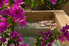 when Im in Marrakech perhaps I will dip my toes in the dipping pool surrounded by bougainvilleas. www.marrakech-riad.co.uk