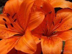 nice Fotografie »o. T. 10 @ Flowers«,  #Blumen
