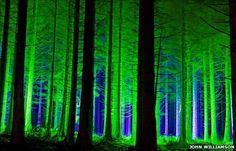 Electric Forest, Rothbury, MI <3