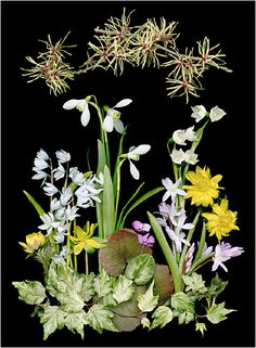 Selections From Natural Companions By Ken Druse, Botanical. - Scanner Photography By Ellen Hoverkamp Art Floral, Flora Botanica, Impressions Botaniques, Pressed Flower Art, Yellow Art, Floral Photography, Organic Plants, Leaf Art, Fauna