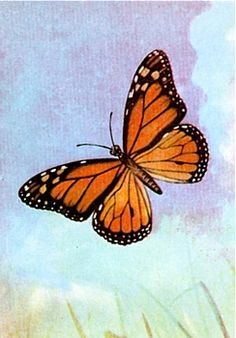 Your Animal Spirit for December 18th is The Butterfly