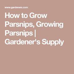 How to Grow Parsnips, Growing Parsnips | Gardener's Supply