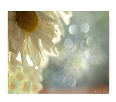 Daisy Bloom in the Sun Photograph...Affordable Home Photography Prints Nature Photography Nature Lover Woodland Scene Flower