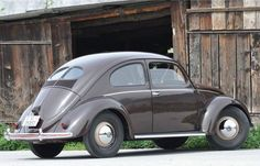 51 split window beetle                                                       …