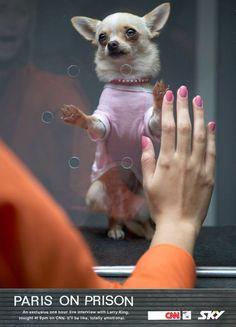 30 annunci creativi con protagonisti i cani