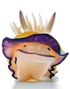 Sea Slug - Unas raras, y coloridas criaturas marinas. - Taringa!