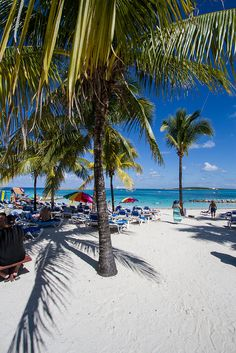 Go green: the palm trees of CocoCay provide some of the best shade on the island.