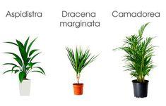 3_plantas_interior_necesitan_poca_luz_blog_ana_pla_interiorismo_decoracion_1