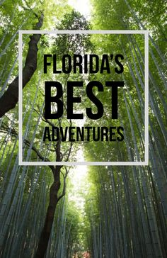 Every day is an adventure in Florida. With beautiful scenery, great weather, and endless activities, it's no wonder the Sunshine State is one of the most popular tourist destinations in the U.S.