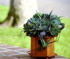 Arranjo com suculentas em uma casinha de pássaros.  Fotografia: http://www.thesucculentperch.com