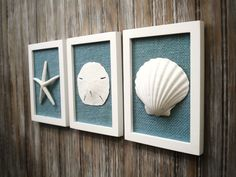 cottage chic set of beach wall art sea shells home decor beach house wall