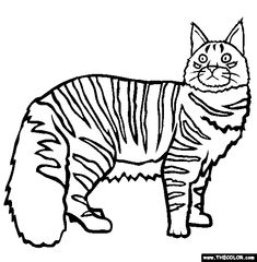 maine coon cat online coloring page