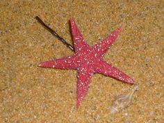 PINK starfish covered in GLITTER bobby pin OR hair clip