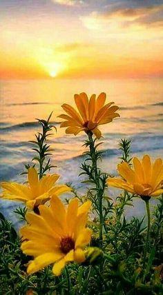 Good morning beautiful landscapes, beautiful images, beautiful world, flowers nature, wild flowers Beautiful Sunrise, Nature Wallpaper, Pretty Flowers, Yellow Flowers, Daisy Flowers, Amazing Nature, Belle Photo, Pretty Pictures, Amazing Pictures