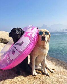 """5,332 Likes, 34 Comments - Ciça & Polo & Mika (@caopanheirolabra) on Instagram: """"Como assim """"acabaram as férias?!"""""""""""