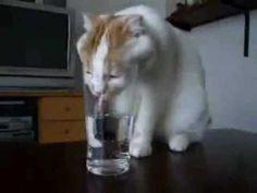 Hammer Lustig !! Katzen haben auch Durst ( kätzchen, süß, Lotus Fontana ) - YouTube