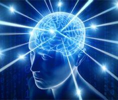 Neuroscience categories of college majors