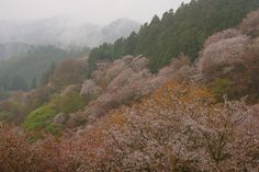 It is a photograph of Nara Yoshino in Japan.