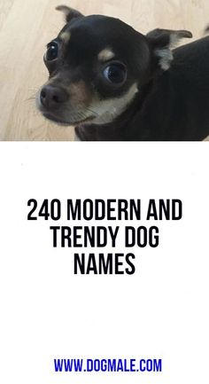 240 Modern and Trendy Dog Names Dog List, Shiloh, Dog Names, Modern, Dogs, Trendy Tree, Doggies, Pet Dogs
