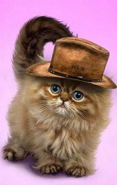 Najlepsze Obrazy Na Tablicy Kotki I Pieski 3 138 W 2019 Cats