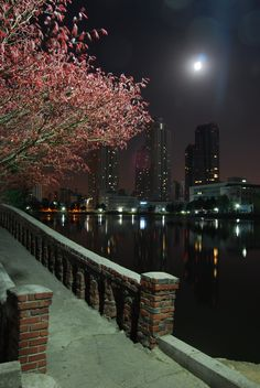 """Jessie-Zoe Robertson: I returned to Konkuk University one evening after dinner (Konkuk area has the best food!). I had forgotten how beautiful the campus was, especially in the evening. The contrast of little old bridges and cherry blossoms amongst the enormous sky scrapers demonstrates the """"Seoul"""" essence of South Korea; the old and new side by side."""
