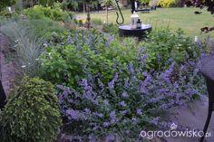 Ogródek Iwony - strona 1233 - Forum ogrodnicze - Ogrodowisko