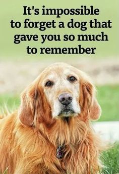 I sure miss my dog that has passed on. Just like a family member...he really gave me so much to remember.