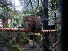 Highland Wildlife Park in Kingussie