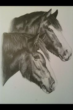 Sketch of my aunties horses
