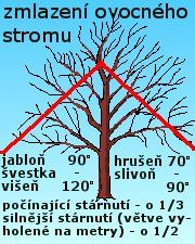 Jabloně - řez Pruning Fruit Trees, Tree Pruning, Garden Plants, Indoor Plants, Insect Hotel, Fruit Plants, Small Gardens, Growing Plants, How To Know