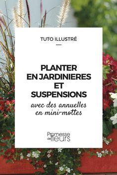 Avoir de belles jardinières longtemps fleuries, c'est facile avec les plants de fleurs en minimottes. Découvrez comment les planter en 6 étapes ! #jardinage #balcon #fleurs
