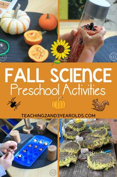 Science Area Preschool, Science For Toddlers, Fall Preschool Activities, Preschool Learning Activities, Preschool Lessons, Preschool At Home, Toddler Activities, Nature Activities, Science Ideas