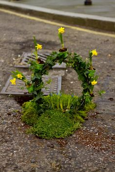 Happy Spring!  Guerrilla gardening by the pothole gardener in London.