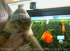 Gotchi - The Fishercat