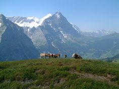 Hiking from First to Grosse Scheidegg, Switzerland....the place where we tragically lost 3 friends in a mudslide.  RIP