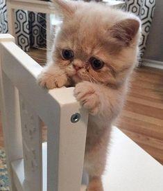 Sooooo sad looking! #cat #kitten #sad #cute #bowchickameowmeow