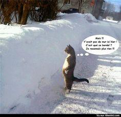 Un chat debout qui regarde la neige - standing cat watching the snow